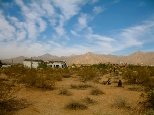 Desert_backyard